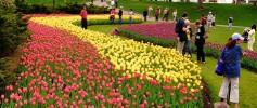 29210-canadian_tulip_festival_ottawa_ontario