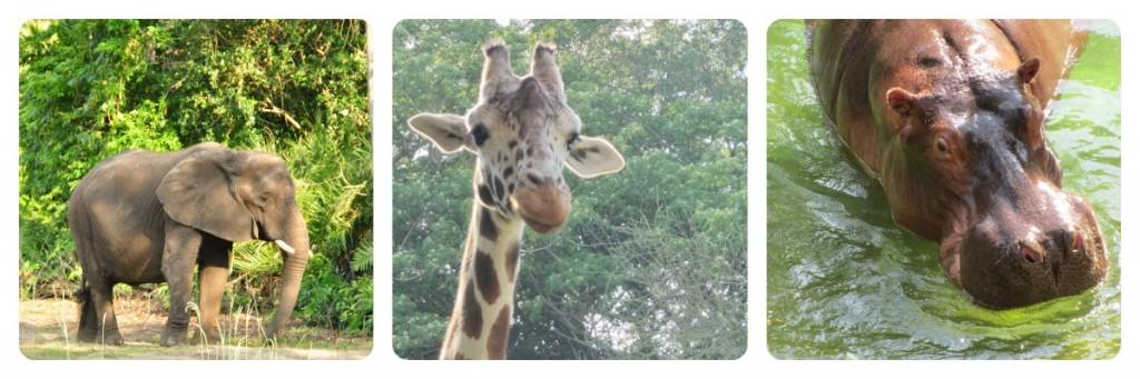 Wild Africa Trek at Disney's Animal Kingdom
