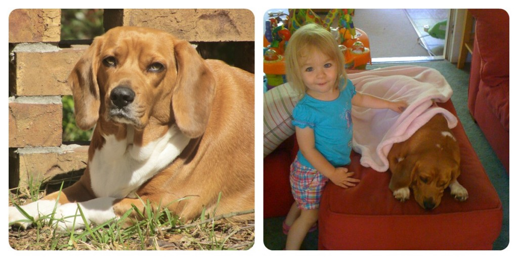 Maggie and Penny Collage 1024x512 Healthy Kids and Healthy Pets Make a Loving Family with IAMS! **Giveaway**