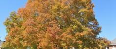 Mars Hill Tree Fall Colors