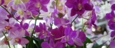 Wordless Wednesday Orchids October 16 2013