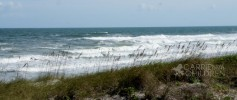 What I Saw This Weekend Jacksonville Beach