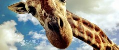 What I Saw This Weekend Retouched Giraffe