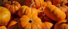 Wordless Wednesday Pumpkins October 29 2014