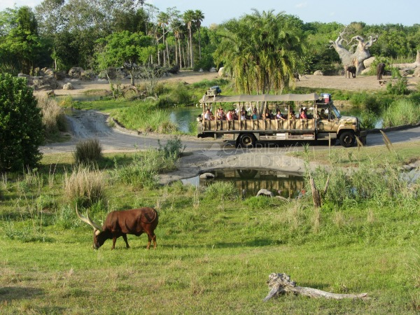 Disney's Animal Kingdom Wild Africa Trek Watermarked