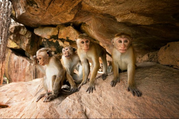 Monkey Kingdom Group
