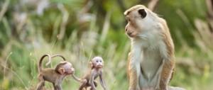 Monkey Kingdom with babies